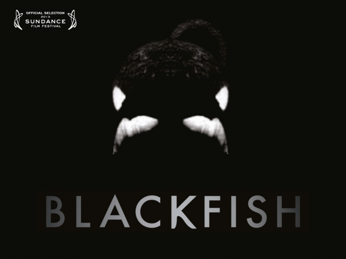 """Blackfish cover"""