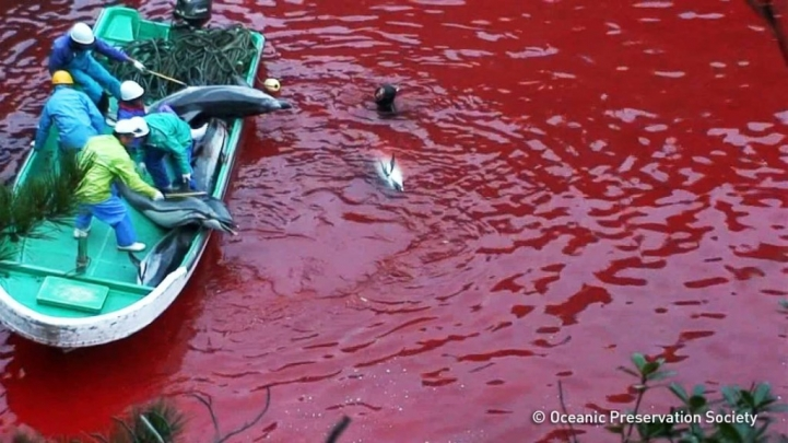 """Taiji Japan - Annual Dolphin Slaughter"""